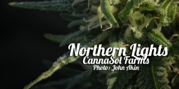cannasol farms northern lights indica
