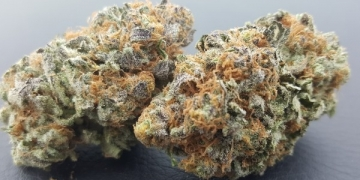 heavenly buds blue city