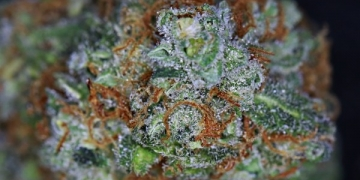 heavenly buds green