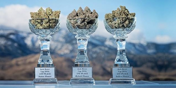 tahoe hydro cup winner photo